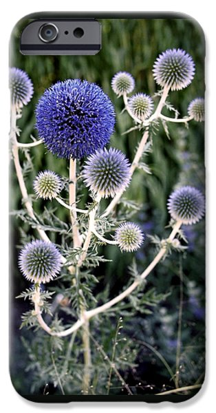 Alliums iPhone Cases - Globe Thistle iPhone Case by Rona Black