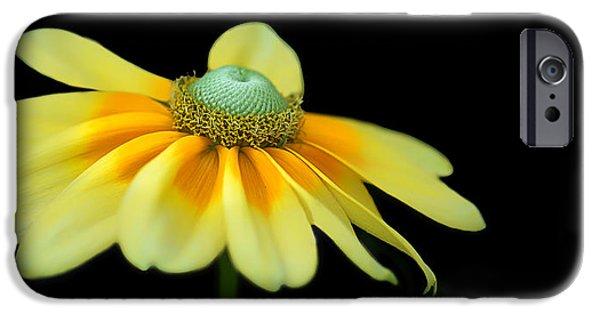 Floral Photographs iPhone Cases - Gloriosa Daisy - Prairie Sun iPhone Case by Nikolyn McDonald