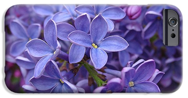 Lilac Flower iPhone Cases - Glorious Lilac Bloom iPhone Case by Juergen Roth