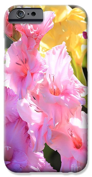 Gladioli iPhone Cases - Glorious Summer Gladiolus iPhone Case by Carol Groenen