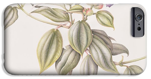 Princess iPhone Cases - Glory Flower Tibouchina Urvilleana 1999 Wc On Paper iPhone Case by Margaret Ann Eden