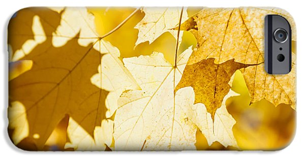 Maple Season iPhone Cases - Glowing fall maple leaves iPhone Case by Elena Elisseeva