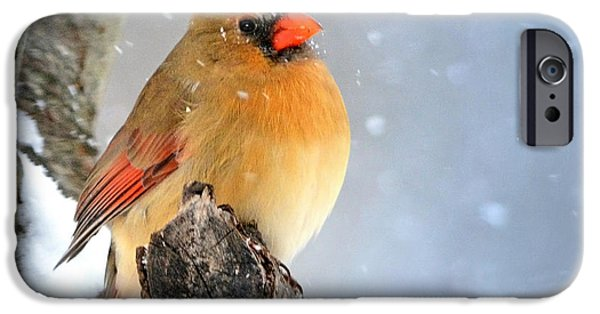 Snow Scene iPhone Cases - Glowing In The Snow iPhone Case by Nava  Thompson