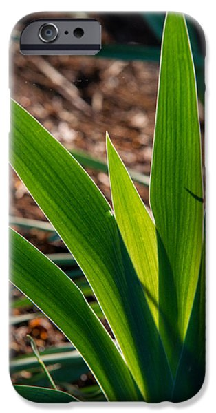 Recently Sold -  - Animation iPhone Cases - Glowing Iris Leaves 1 iPhone Case by Douglas Barnett