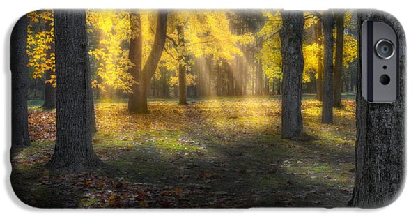 Litchfield County Landscape iPhone Cases - Glowing Maples iPhone Case by Bill  Wakeley