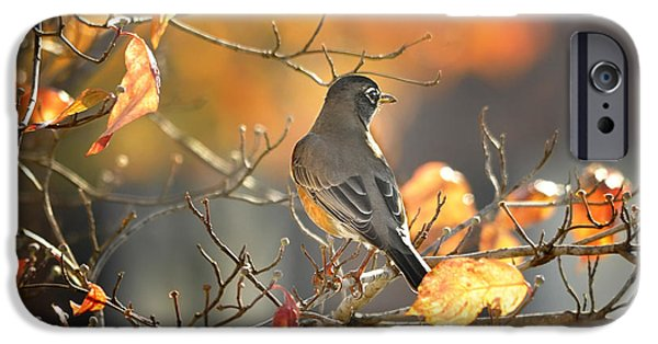 Arkansas iPhone Cases - Glowing Robin 2 iPhone Case by Nava  Thompson
