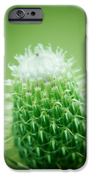 Thistle iPhone Cases - Glowing Thistle iPhone Case by Shane Holsclaw