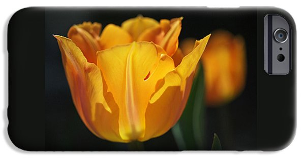 Best Sellers -  - Botanical iPhone Cases - Glowing Tulips iPhone Case by Rona Black