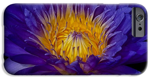 Waterlily iPhone Cases - Glowing Waterlily iPhone Case by Susan Candelario