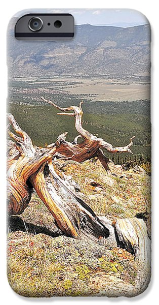 Gnarled iPhone Case by Aaron Spong