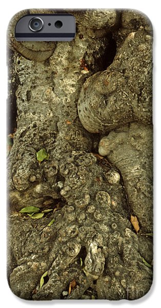Gnarled Haitian Tree Trunk iPhone Case by Anna Lisa Yoder