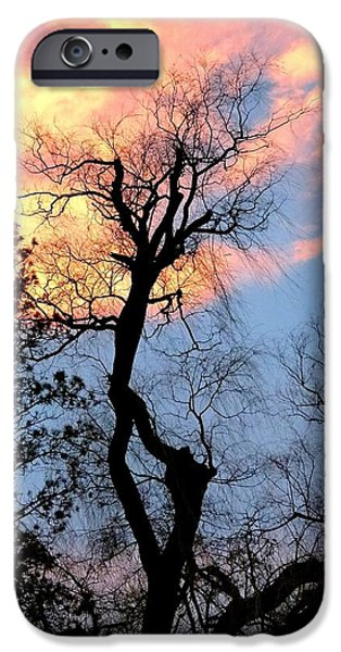Willow Lake iPhone Cases - Gnarled Tree Silhouette iPhone Case by Will Borden