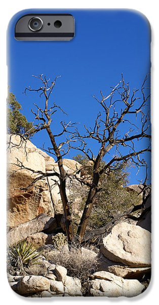 Gnarly iPhone Cases - Gnarly Joshua Tree iPhone Case by Barbara Snyder