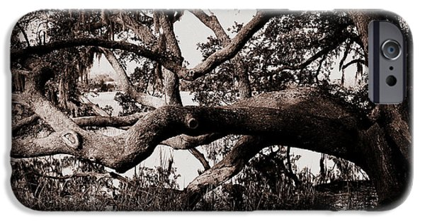 Gnarly iPhone Cases - Gnarly Limbs at the Ashley River in Charleston iPhone Case by Susanne Van Hulst