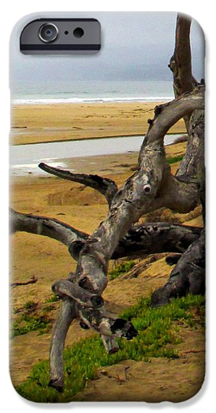Gnarly Tree iPhone Case by Barbara Snyder