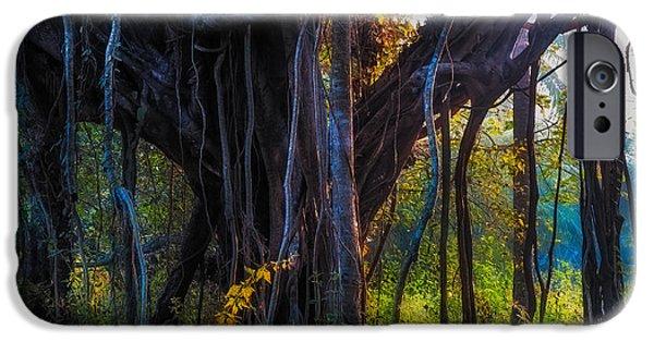 Tree Roots iPhone Cases - Goan Banyan Tree. India iPhone Case by Jenny Rainbow