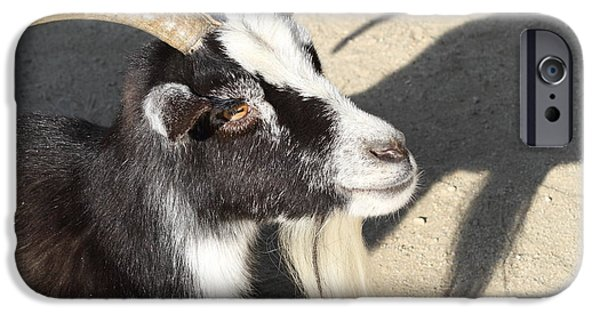 Swiss Horn iPhone Cases - Goat 7D27402 iPhone Case by Wingsdomain Art and Photography