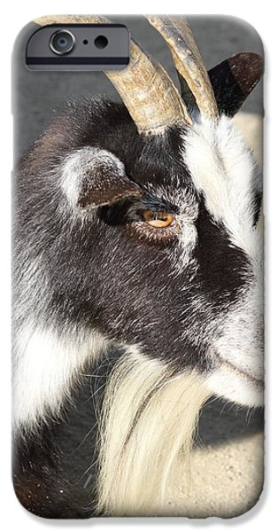 Swiss Horn iPhone Cases - Goat 7D27405 iPhone Case by Wingsdomain Art and Photography