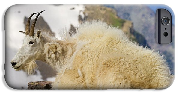 Ledge iPhone Cases - Goat Rest iPhone Case by Aaron Whittemore