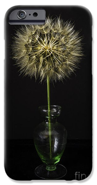 Office Glass iPhone Cases - Goats Beard In Vase iPhone Case by Mitch Shindelbower