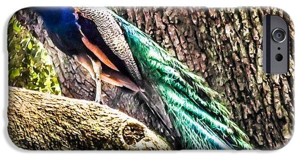 Peacock iPhone Cases - Gods Heavenly Creatures iPhone Case by Karen Wiles