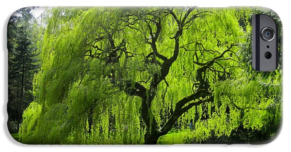 Recently Sold -  - Willow Lake iPhone Cases - Gods Quiet Majesty iPhone Case by Carol Rauss
