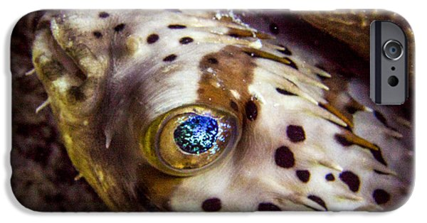 Porcupine Fish iPhone Cases - Goggly Eye iPhone Case by Jean Noren