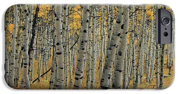 Nature Scene iPhone Cases - Golden Aspen Forest iPhone Case by Johnny Adolphson