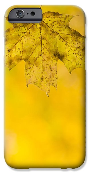 Tree iPhone Cases - Golden Autumn iPhone Case by Sebastian Musial