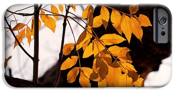 Tree iPhone Cases - Golden Beech Leaves iPhone Case by Rona Black