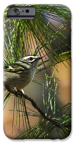 Golden-Crowned Kinglet iPhone Case by Christina Rollo