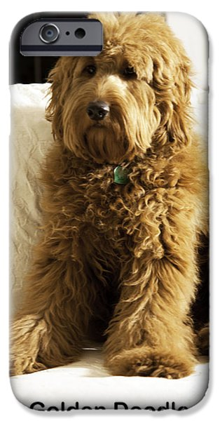 Puppies iPhone Cases - Golden Doodle iPhone Case by Madeline Ellis