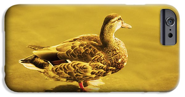 D.c. iPhone Cases - Golden Duck iPhone Case by Nicola Nobile