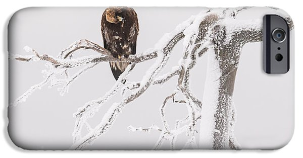 Wintertime Pyrography iPhone Cases - Golden eagle  iPhone Case by Marko Tuominiemi