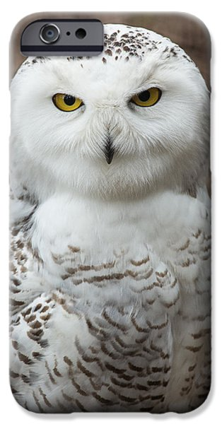 Snowy Photographs iPhone Cases - Golden Eye iPhone Case by Dale Kincaid