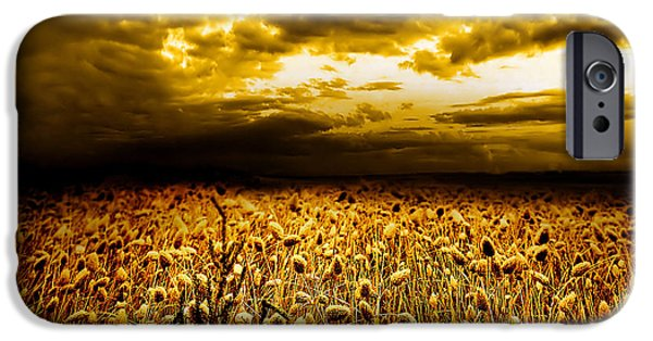 Field. Cloud iPhone Cases - Golden Fields iPhone Case by Photodream Art