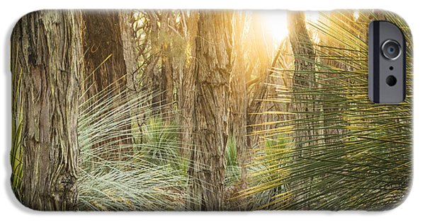 Fleurieu Peninsula iPhone Cases - Golden Forest iPhone Case by Tim Hester