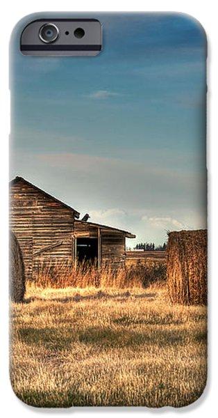 Golden Hay iPhone Case by Lisa Knechtel