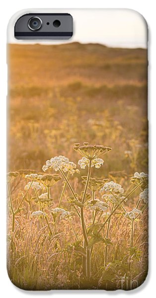 July iPhone Cases - Golden Hogweed iPhone Case by Anne Gilbert