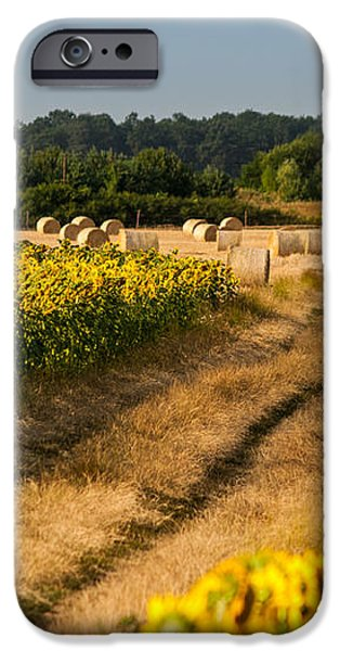 Golden hour on country road iPhone Case by Davorin Mance
