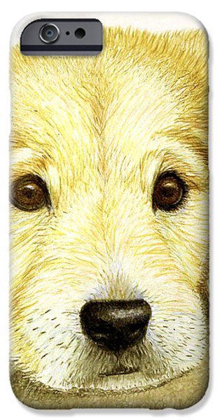 Golden Lab Pup iPhone Case by Jacqueline Barden