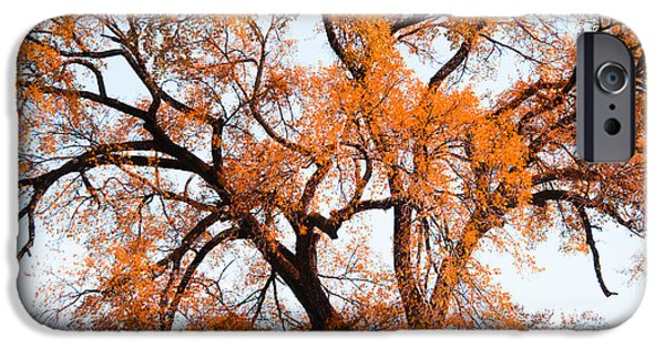 Beautiful Autumn Day iPhone Cases - Golden Leaves iPhone Case by Shelby  Young