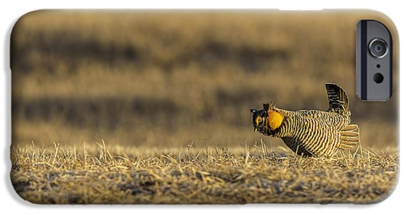Matting iPhone Cases - Golden Light On The Prairie iPhone Case by Thomas Young