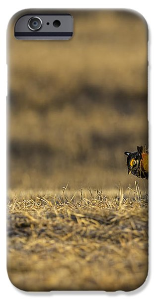 Golden Light On The Prairie iPhone Case by Thomas Young