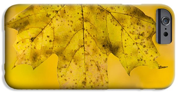 Autumn iPhone Cases - Golden Maple Leaf iPhone Case by Sebastian Musial