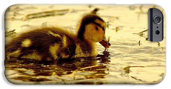 Cabin Window iPhone Cases - Golden Moment - Duck iPhone Case by Robert Frederick