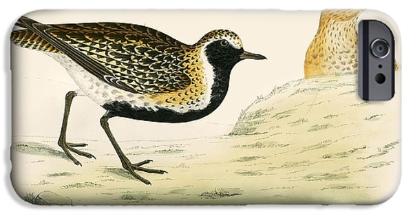 Hunting Bird iPhone Cases - Golden Plover iPhone Case by Beverley R. Morris