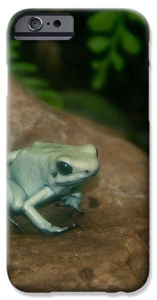 Golden Poison Frog Mint Green Morph iPhone Case by Mark Newman