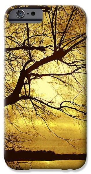 Yellow Ochre iPhone Cases - Golden Pond iPhone Case by Ann Powell
