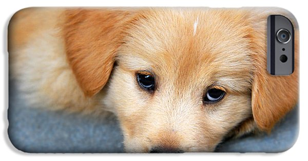 Fuzzy Golden Puppy iPhone Cases - Retriever Puppy iPhone Case by Christina Rollo